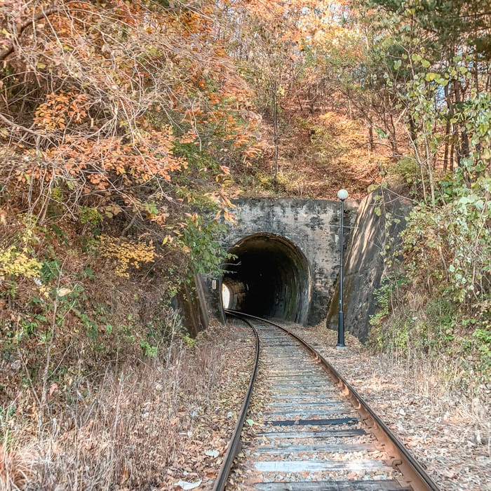 Gangchon Rail Park Autumn tunnel